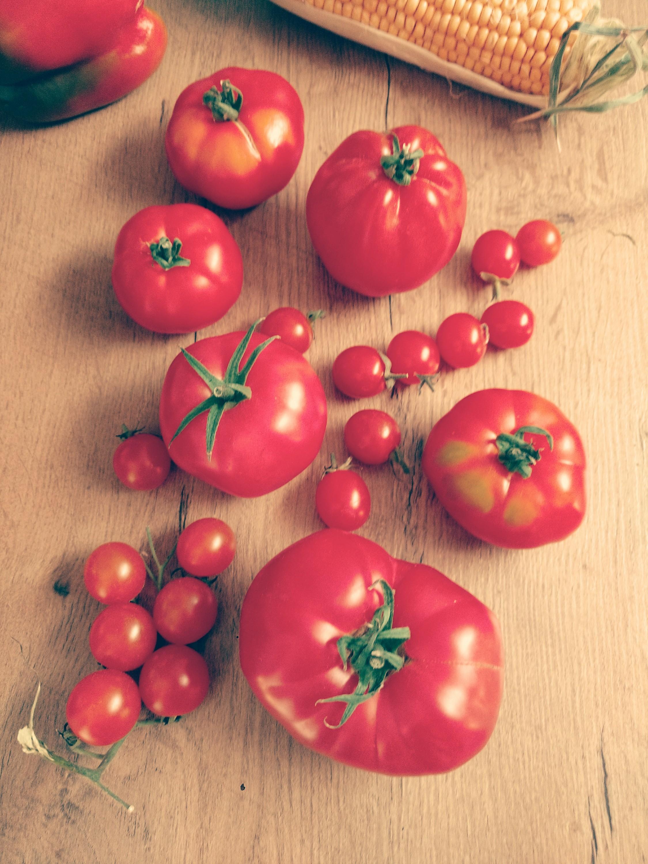Tomatenzeit. Leckerer Tomatensorten.